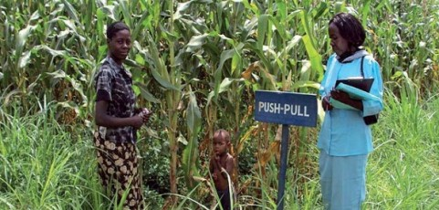 Impact assessment of push–pull technology developed and promoted by icipe and partners in eastern Africa