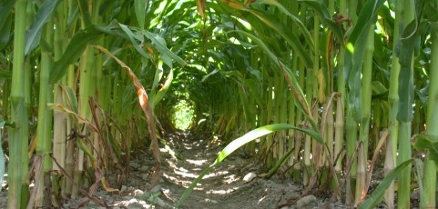 Integrated Cropping Systems Trials (WICST) in Wisconsin, USA