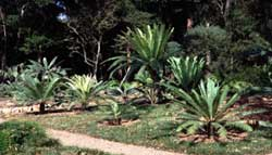 Using Agroecology in a Botanical Garden, Santa Barbara, California, USA