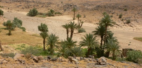 Gender and Alfalfa Improvement in the Oasis Area, Ziz Valley, Morocco