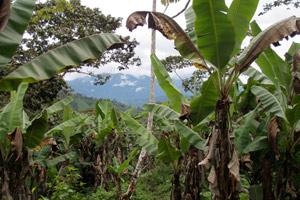 Agro-ecology: beyond food