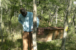 Bees bring a new buzz to family farming in Zimbabwe