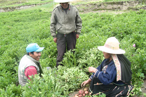 How Yapuchiris build climate resilience