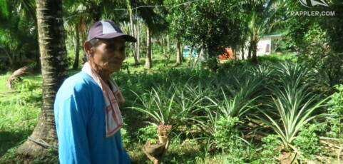 A 'green revolution' that may save Filipino coconut farmers