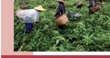 Multiple Pathways: Case studies of sustainable agriculture in China