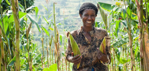 More and Better: Sign on to the letter about the Sustainable Development Goals (SDGs) and agriculture