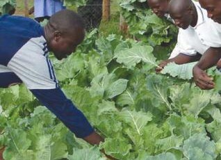 Biointensive Agriculture Training Program in Kenya