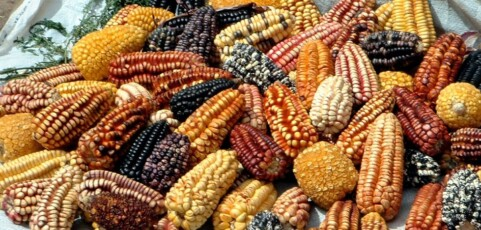 Agroecology and the struggles for food sovereignity in the Americas