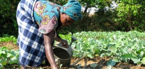 Climate Resilient Agriculture: Experiences from Action Aid and its partners