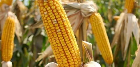 Organic farming: the successful story of Mr. Chidumula Nkhata