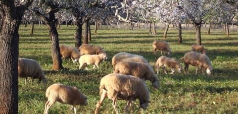 Agroecologìa. Bases científicas para una agricultura sustentable