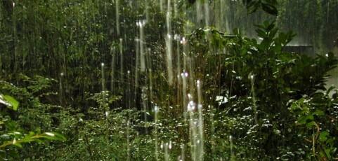 Sri Lanka Analog Forestry