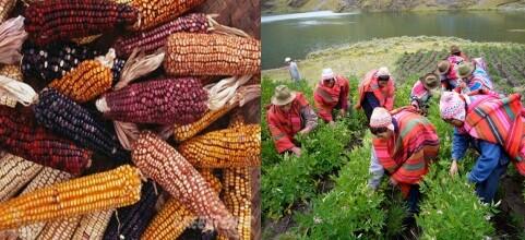 La revolucion ecologica en America Latina