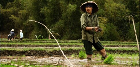 Agroecology and Advocacy: Innovations in Asia