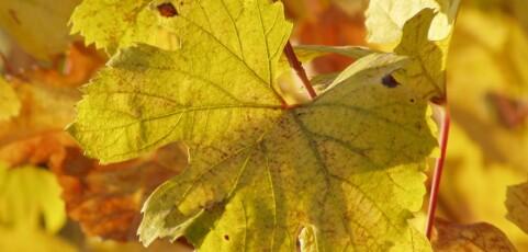 Ecological Principles of Vineyard Vegetation Management on California's Northern Coast