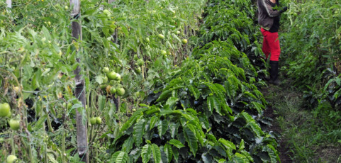 """Interview: """"Agroecology is an epistemological revolution"""""""