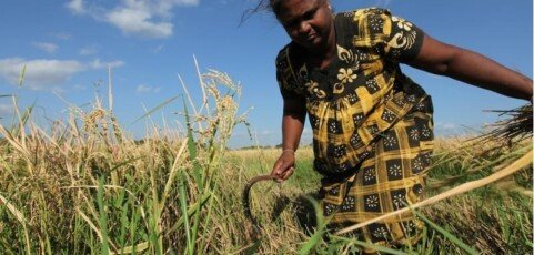 Tipping the Balance: Policies to shape agricultural investments and markets in favour of small-scale farmers