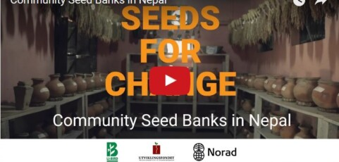 Seeds for Change: Community Seed Banks in Nepal