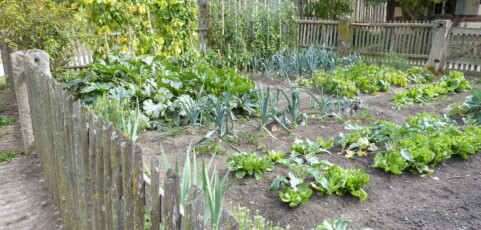 Small-scale farming with enormous rewards: Biointensive Agroecology on a Community Farm in California, USA
